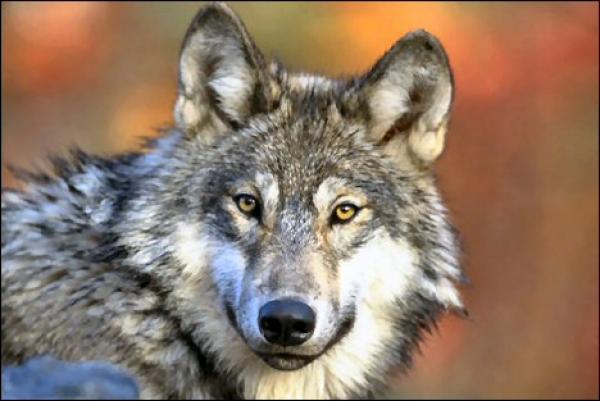 Senad Kapo: I dalje je na njeg' k'o na vuka hajka